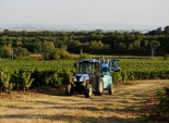 This years grape crop is expected to be lower than last year