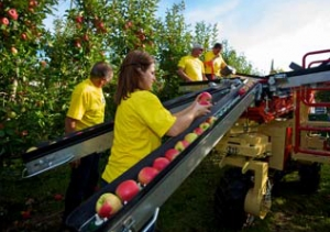 Meccanica Zucal - The right decision in the fruit handling