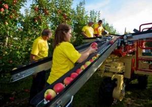 Meccanica Zucal - Правилното решение за овощните градини
